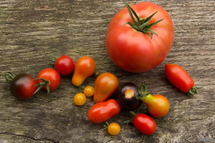 История появления помидора