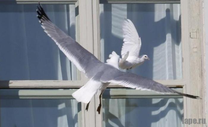 Как влияет цвет птицы на предсказание