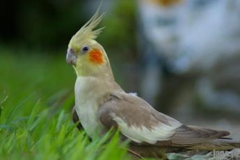 Что подарить на Новый год попугаю?