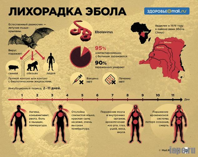 Как распространяется вирус Эбола