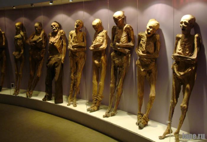 Музей Виллема Вролика