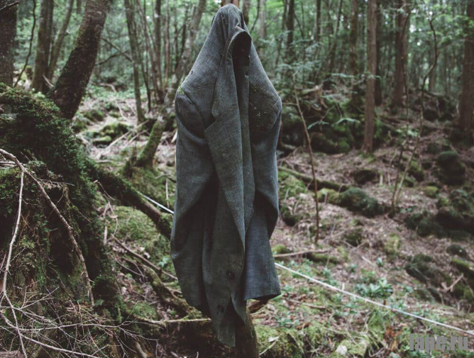 Лес самоубийц Аокигахара