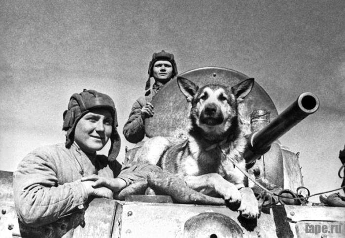 Истории собаки: Джульбарс