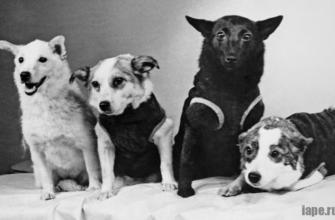 Самые знаменитые собаки, которые оставили свой след в истории