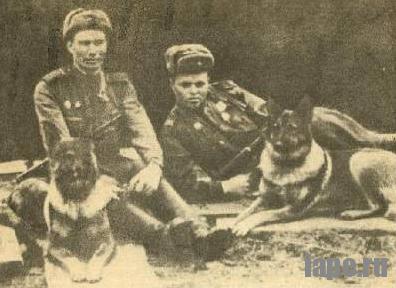 Истории собаки: Дина