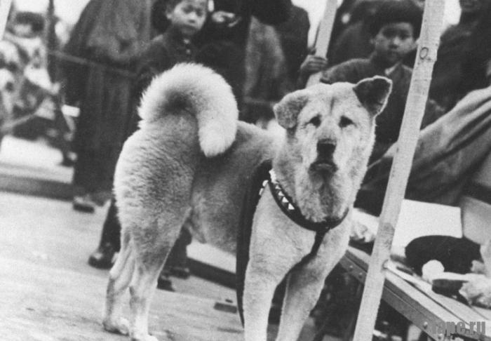 Пес Хатико