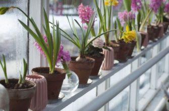 Полив цветов во время отпуска: эффект теплицы